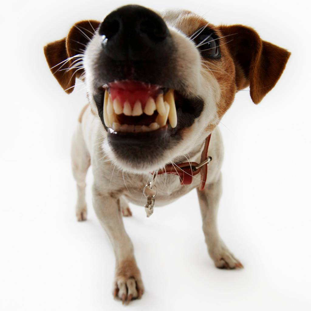 dog bite prevention rainbow city pet clinic
