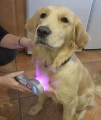laser-on-dog